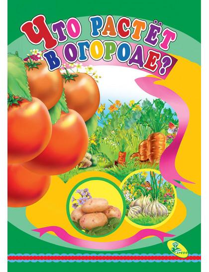 Книжка-картонка А5. Что растет на огороде?